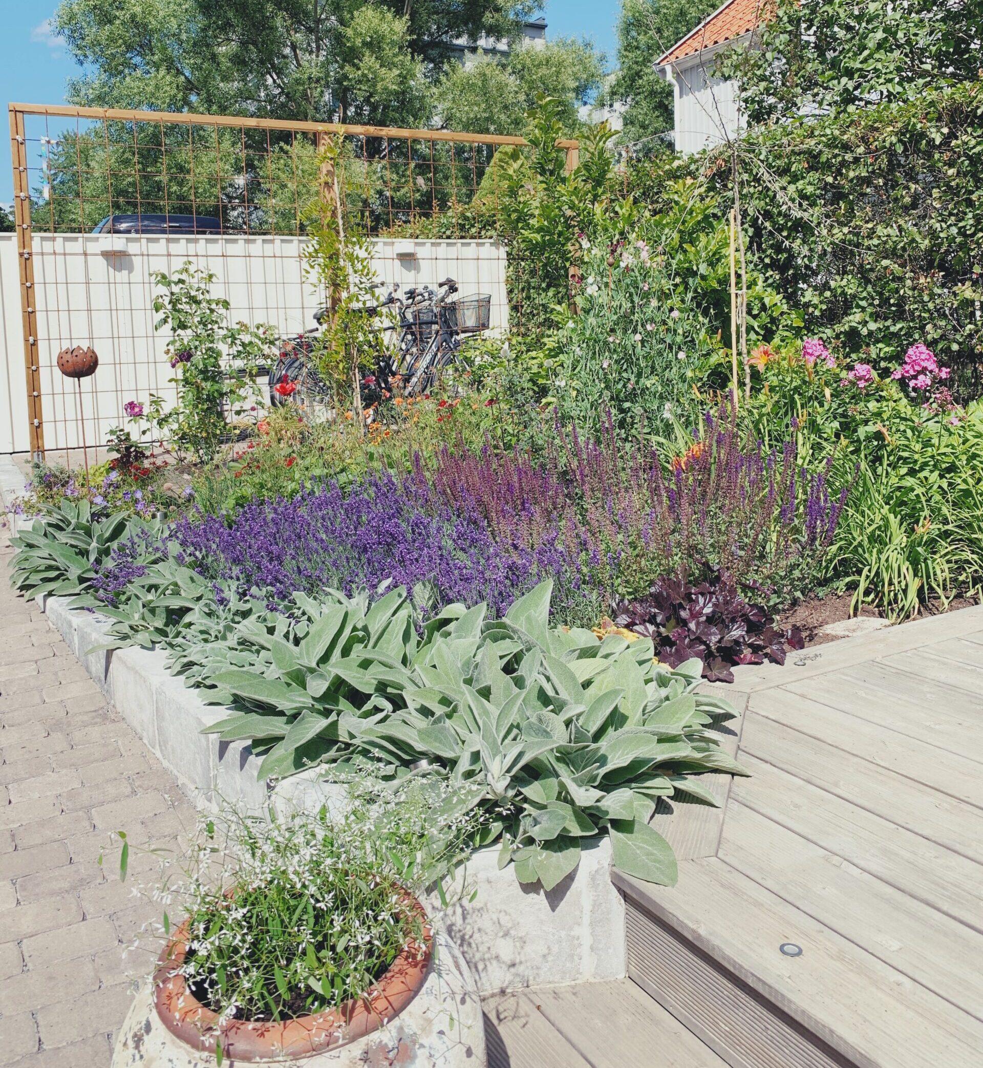 Trädgård före- och efter