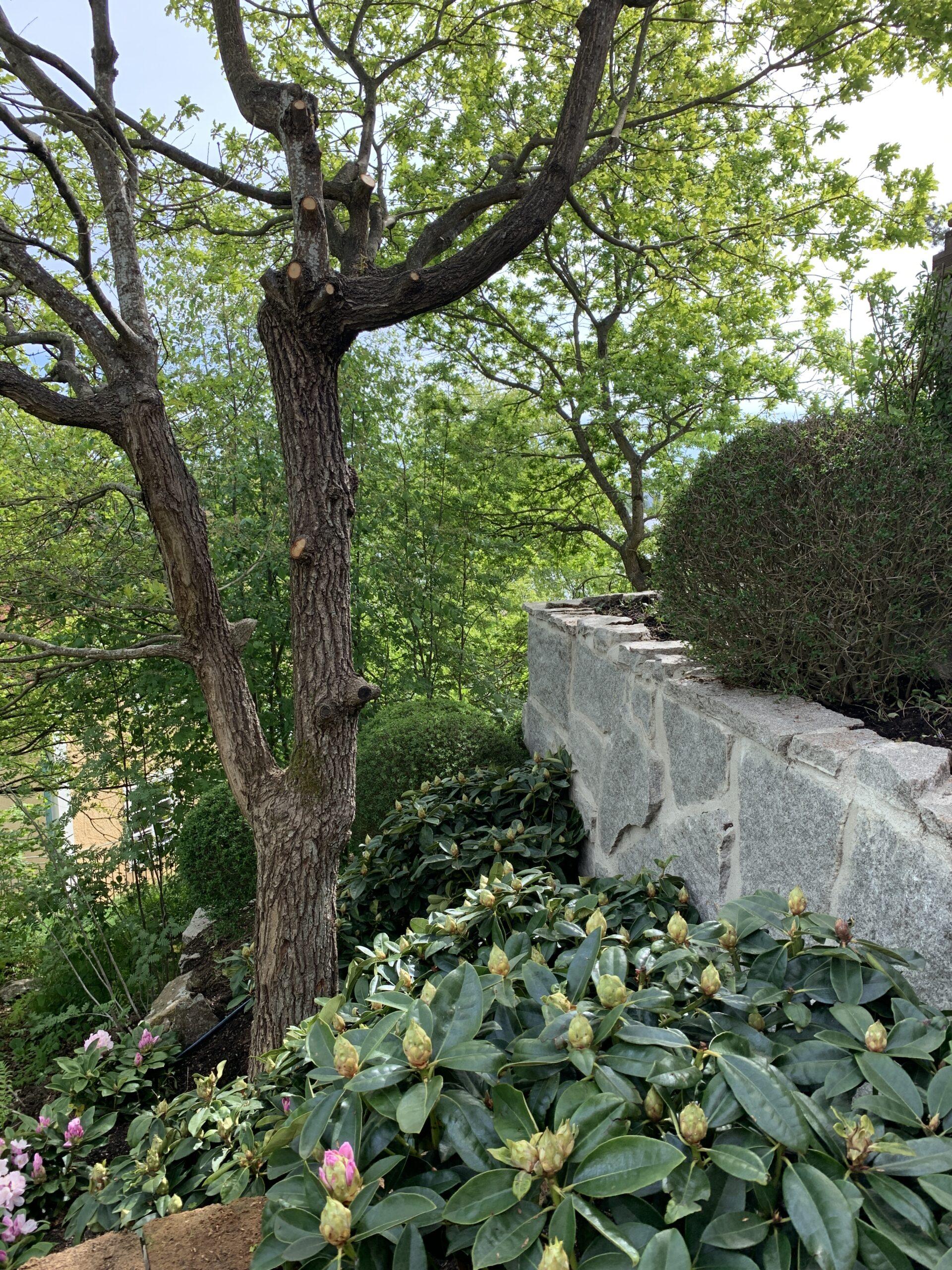 trädgårdsarkitekt design av slänt med vintergröna växter